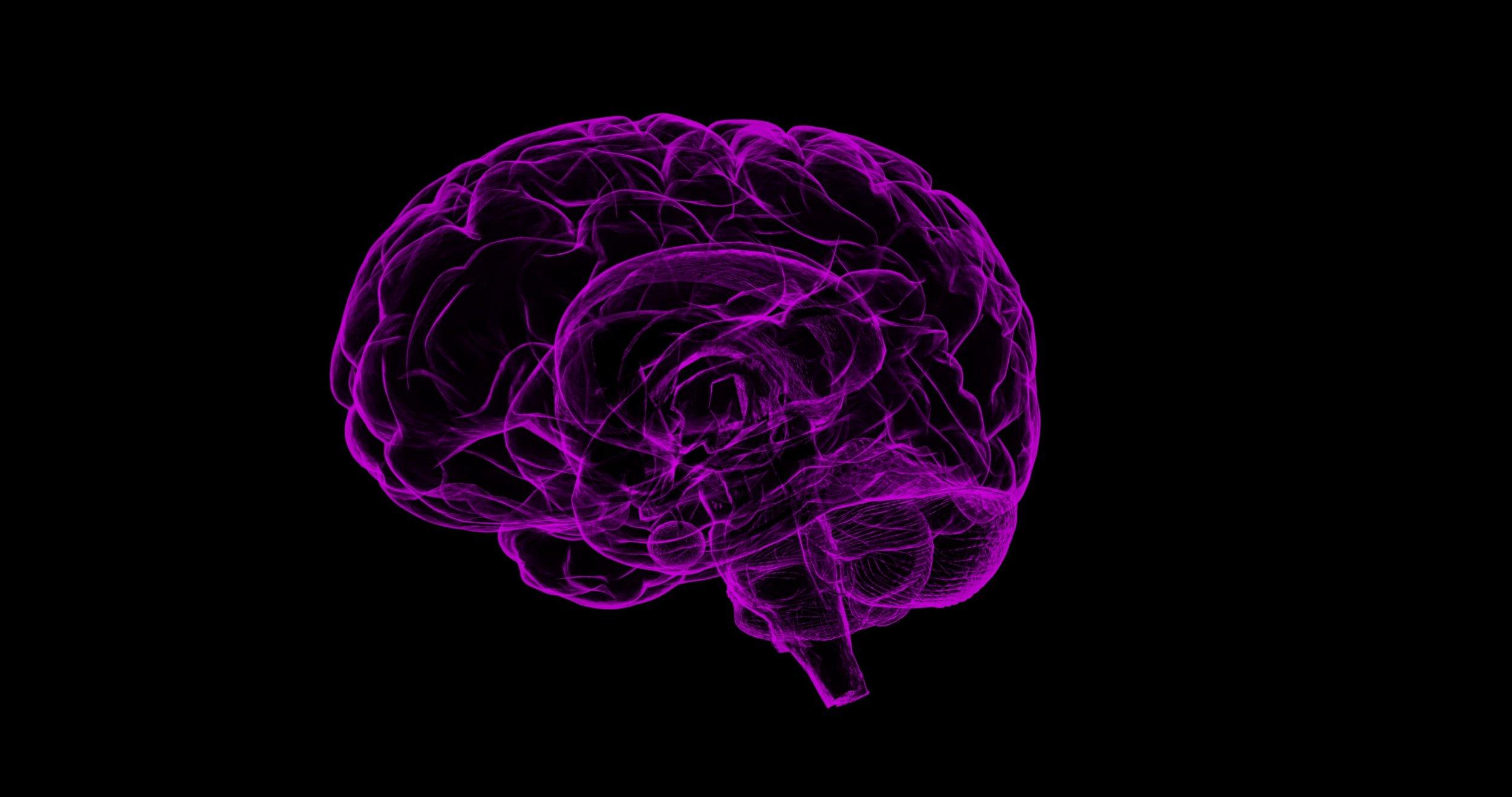 brain-1787622.jpg