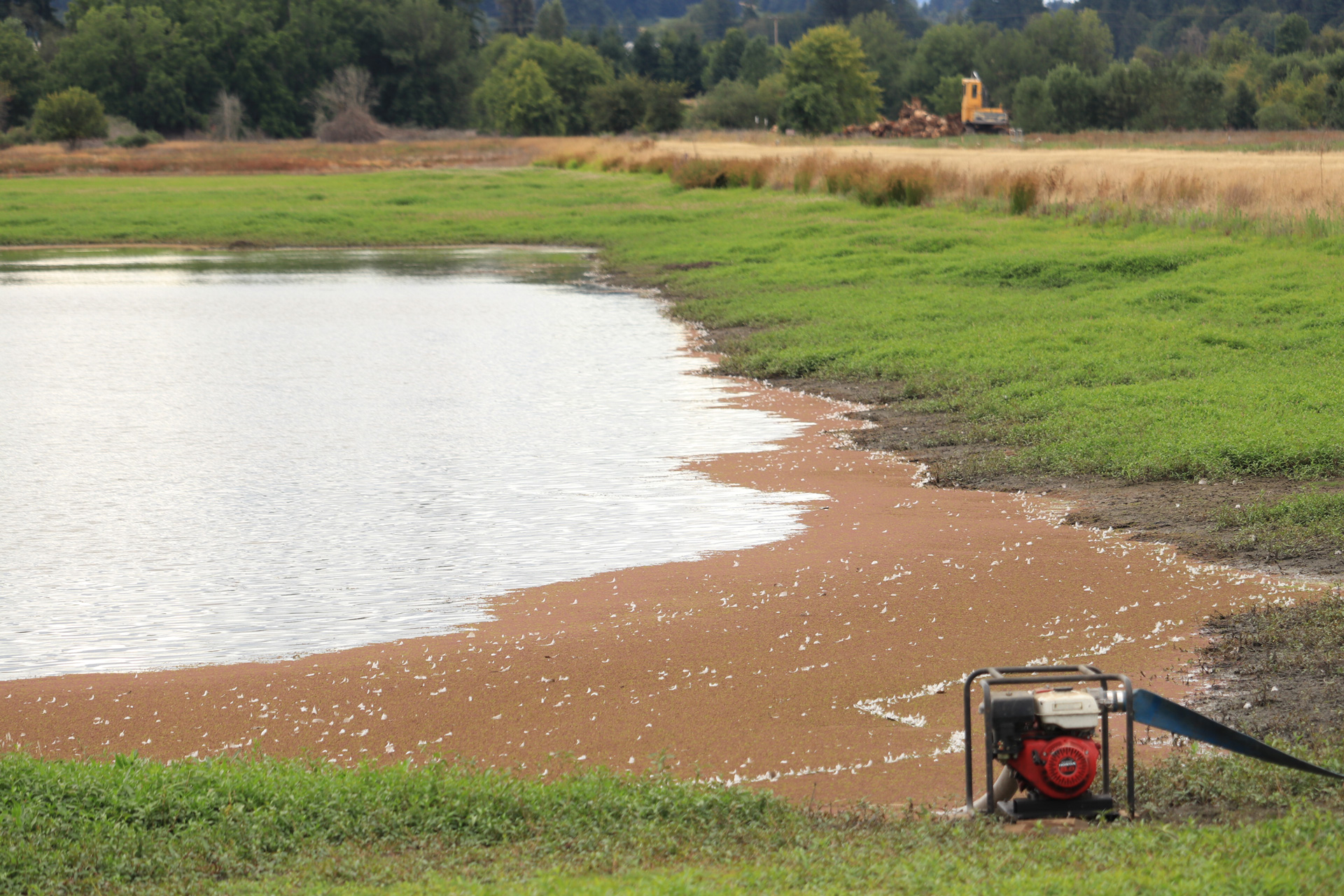 A small pump speeds up the natural drying of the 2S wetland.