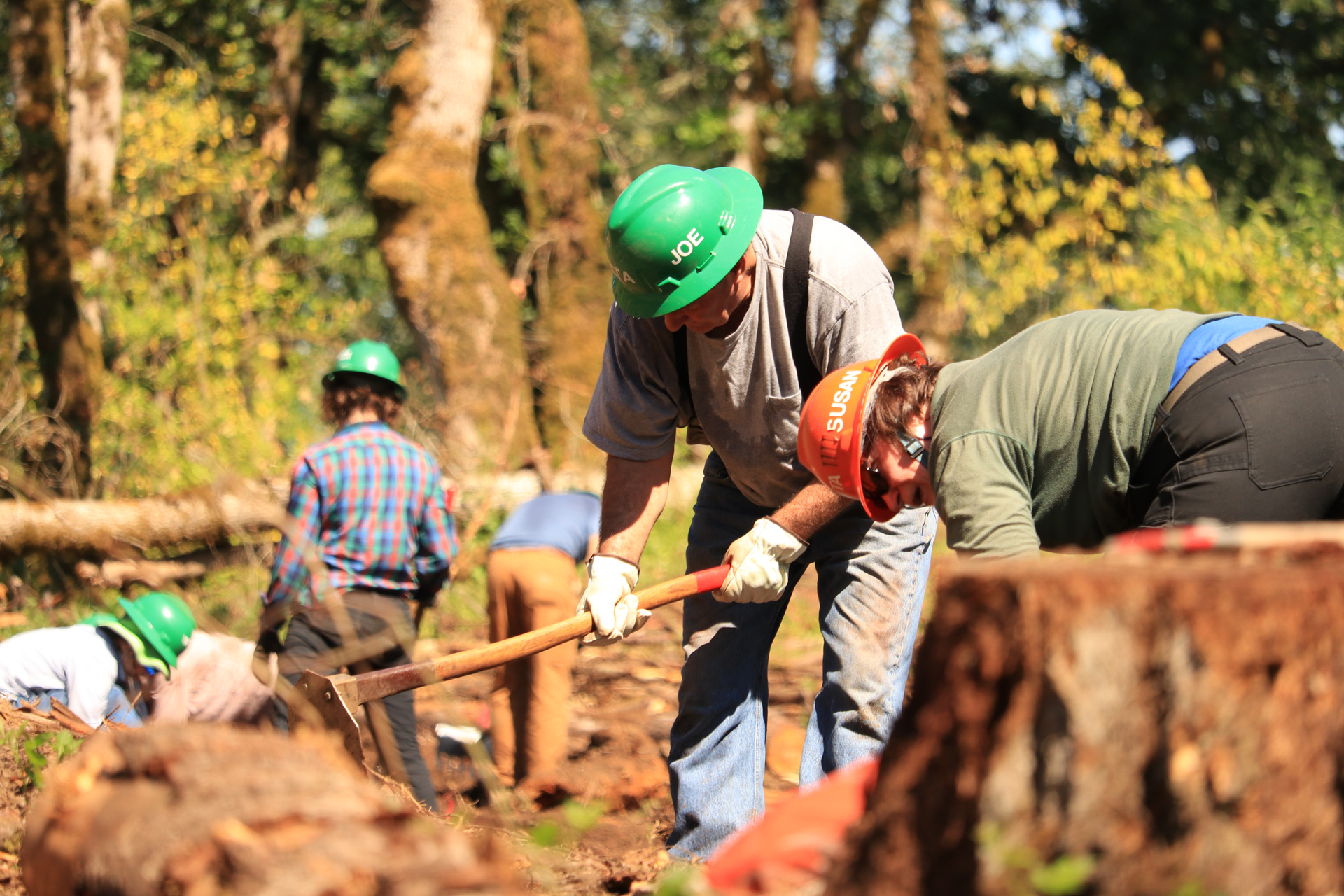 Working-Near-Stump-Focused.jpg
