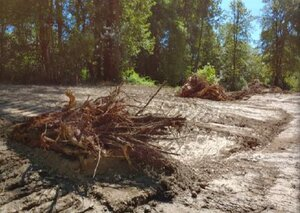 Sequoia root wads placed in the wetland at the convergence of Gee Creek and an unnamed creek.