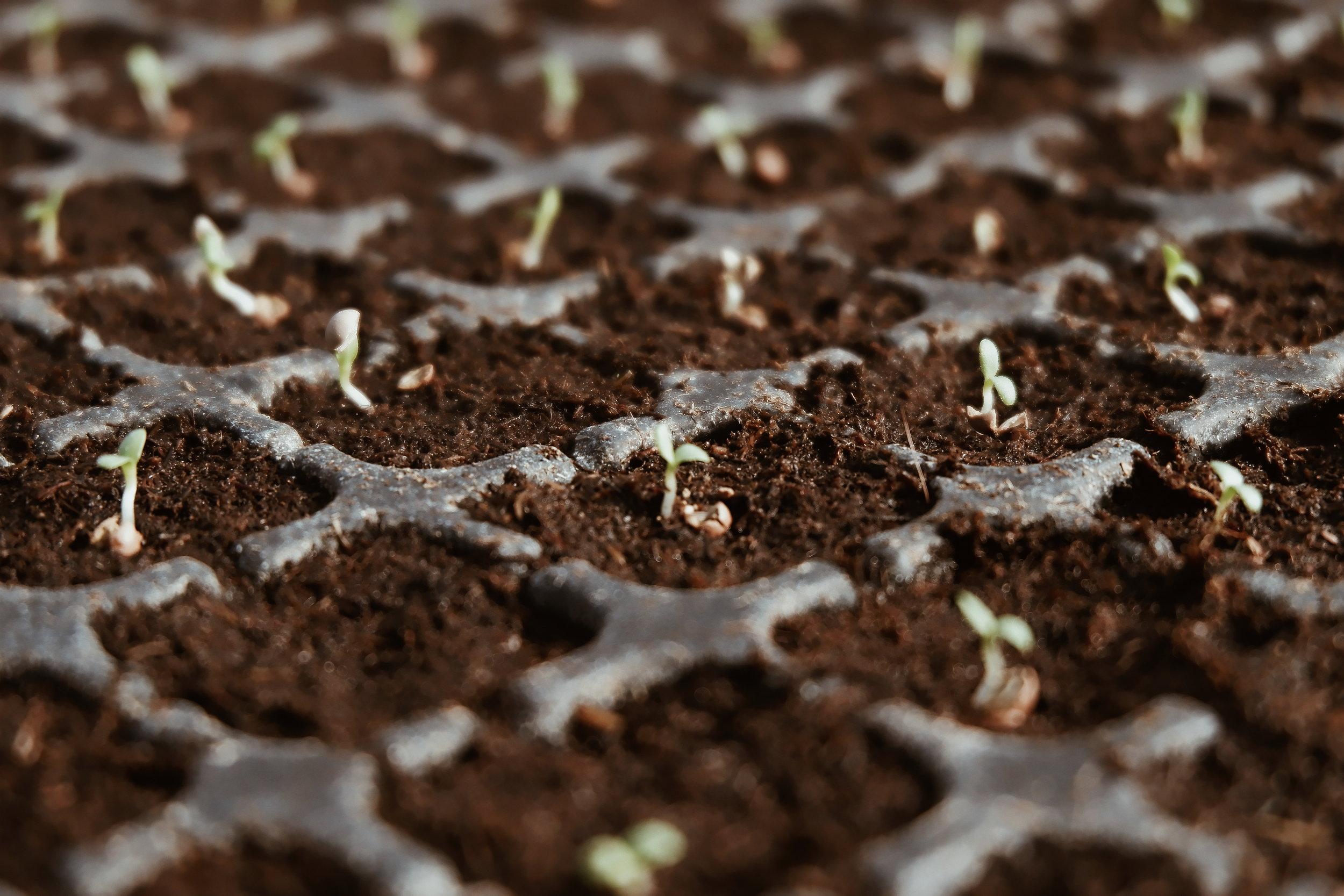 Lettuce Garden Maintenance