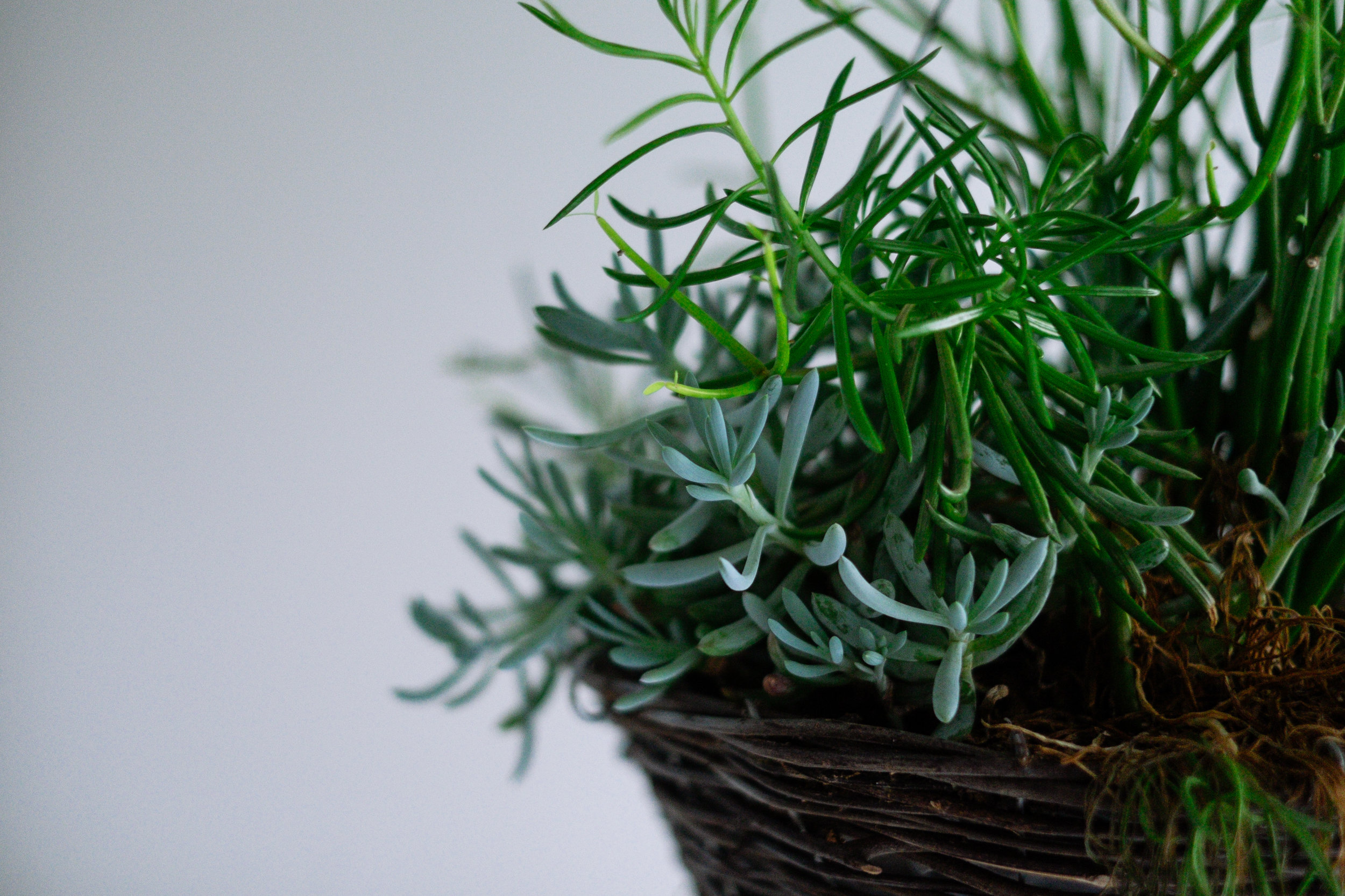 Hanging Plants - Garden Maintenance