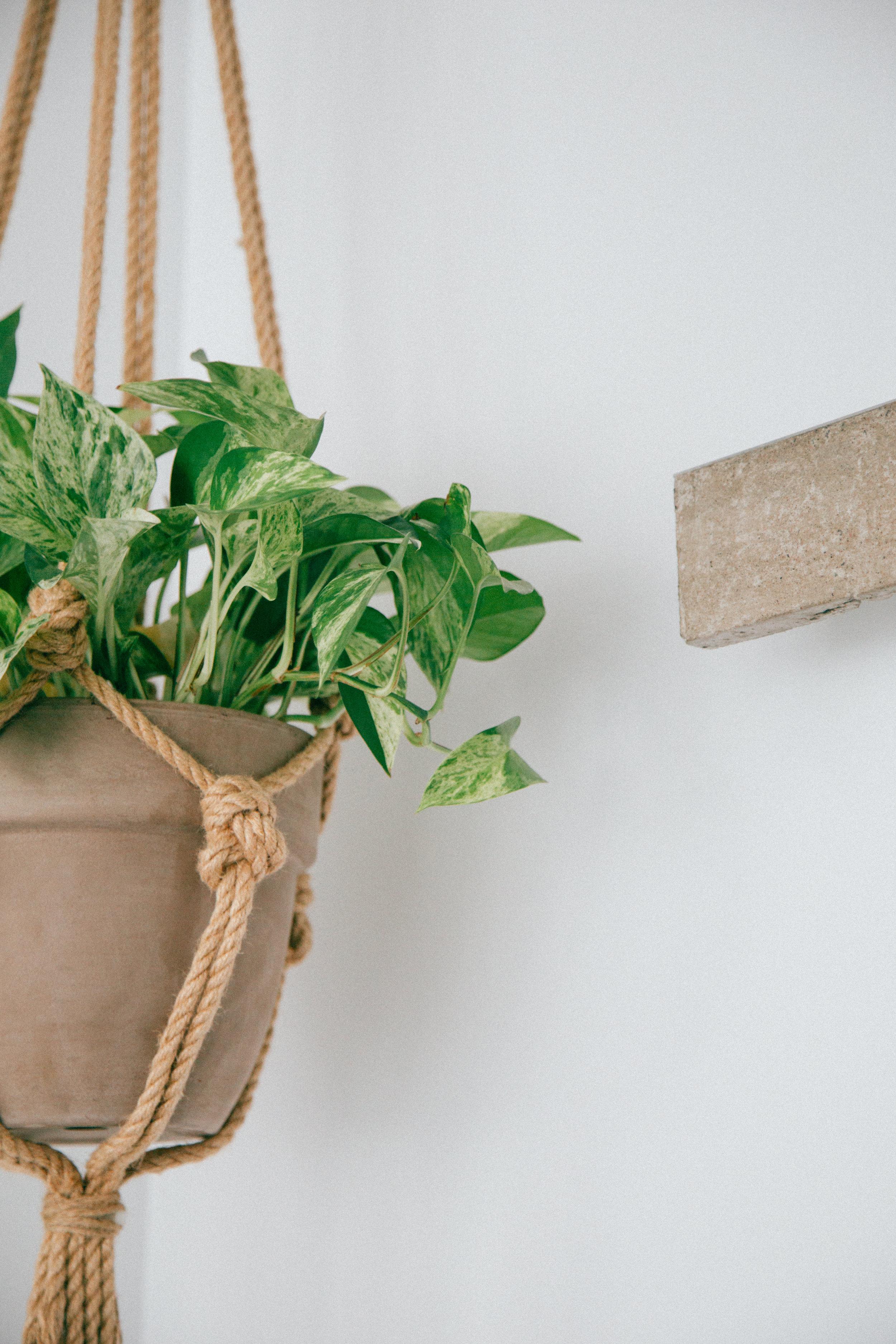 Hanging Planters - Garden Maintenance