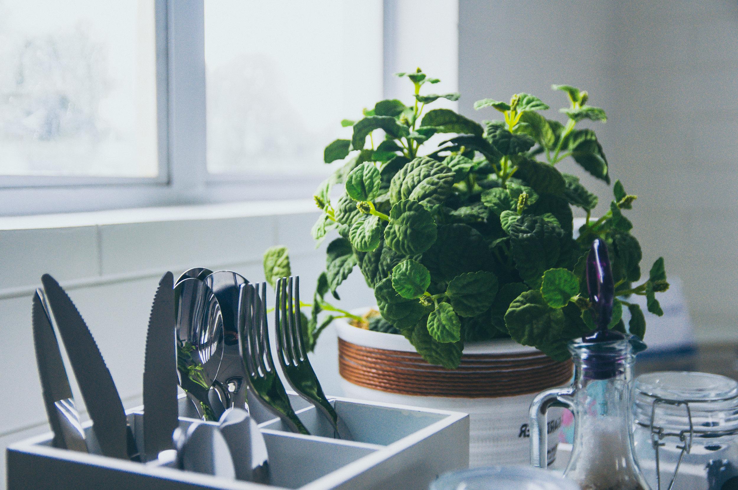 Benefits of Plants Indoors