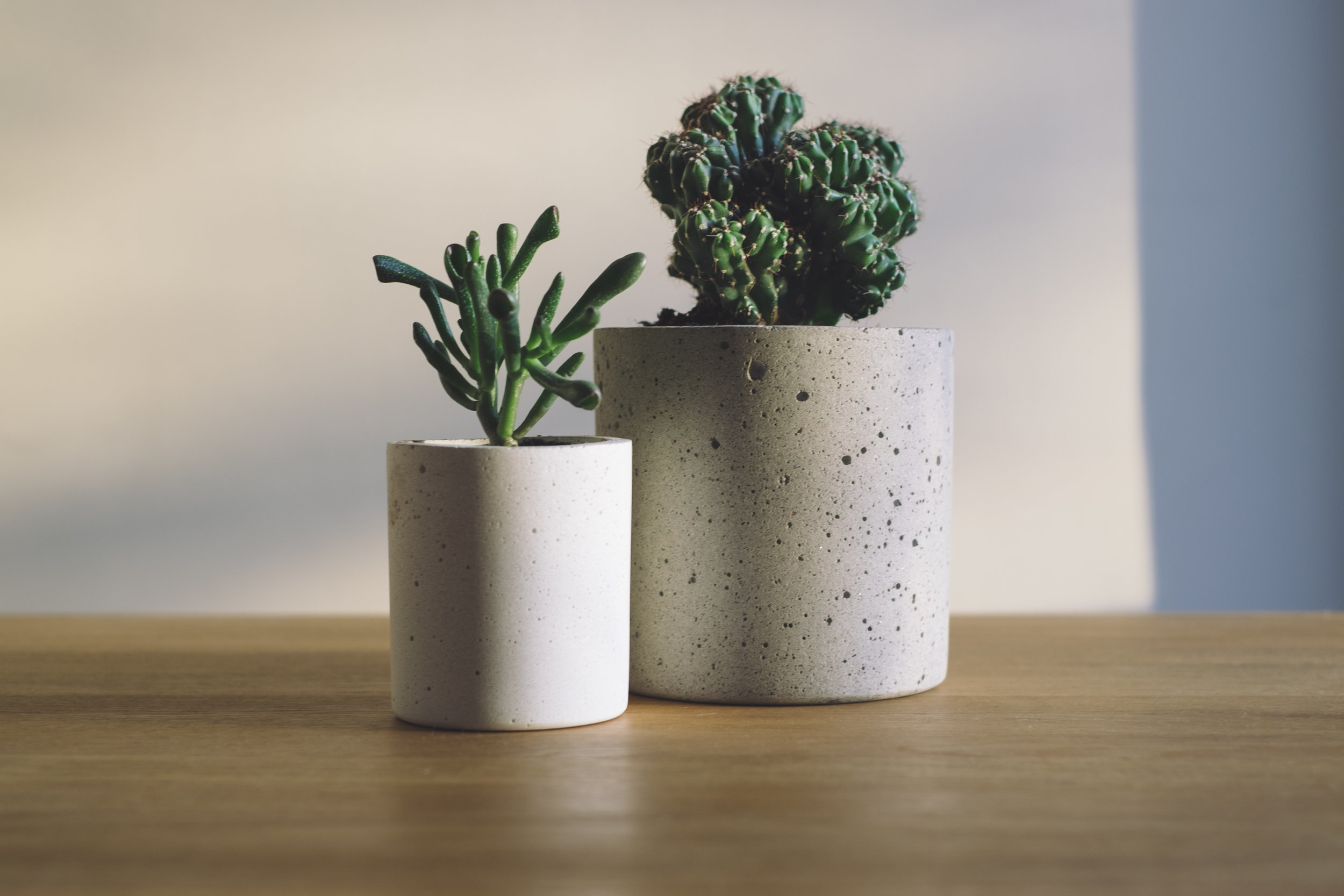 5 Tips to Keep Your House Plants Healthy