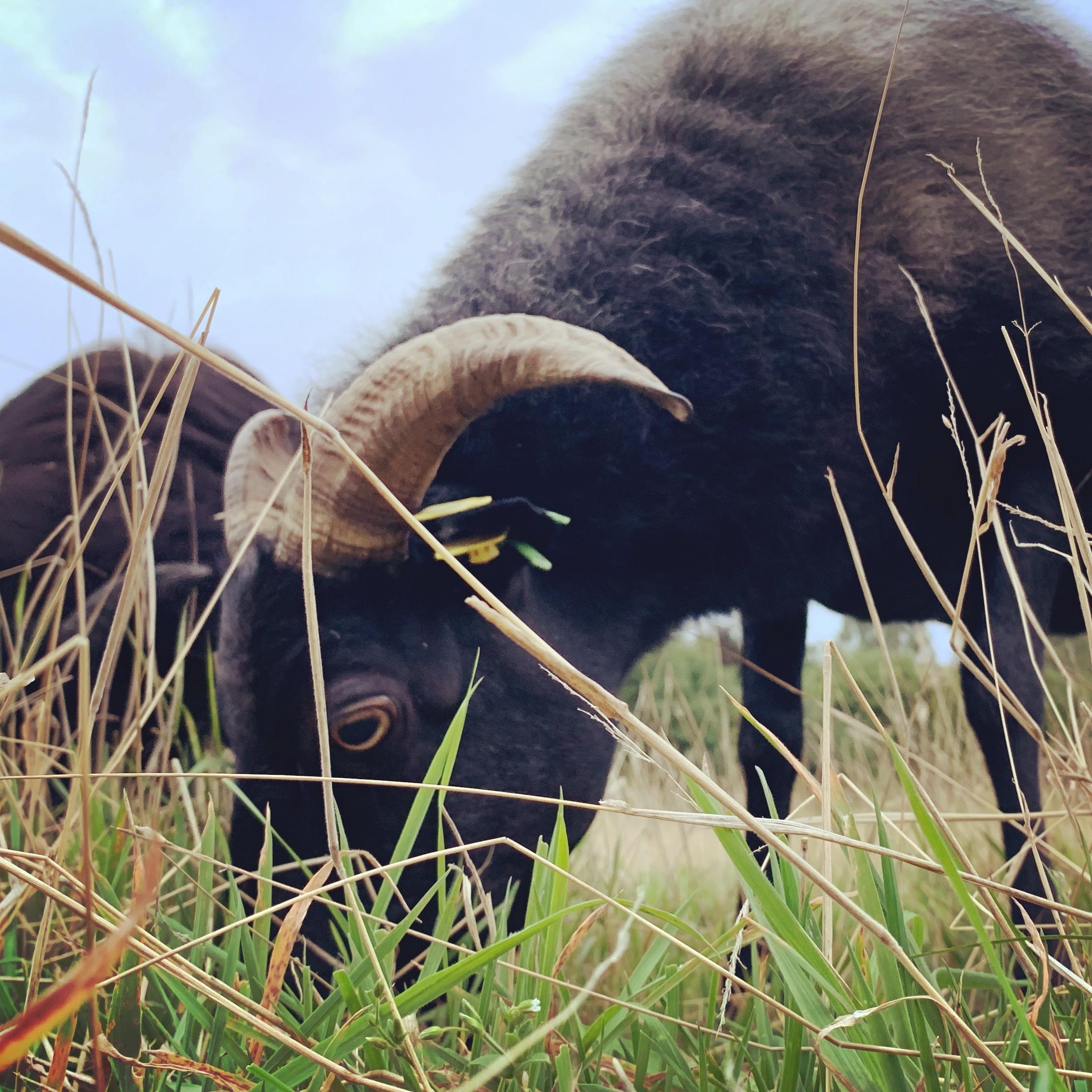 Wer wir sind - Der Hauptbestandteil unseres Lebens sind wohl unsere Schafe. Es vergeht kein Tag ohne. Was wir sonst schon so erlebt haben und warum wir heute die sind, die wir sind, erfahrt ihr hier!