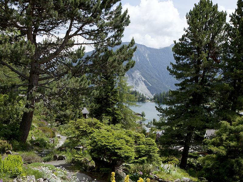 © Jardin botanique alpin Flore-Alpes ; Robert Hofer