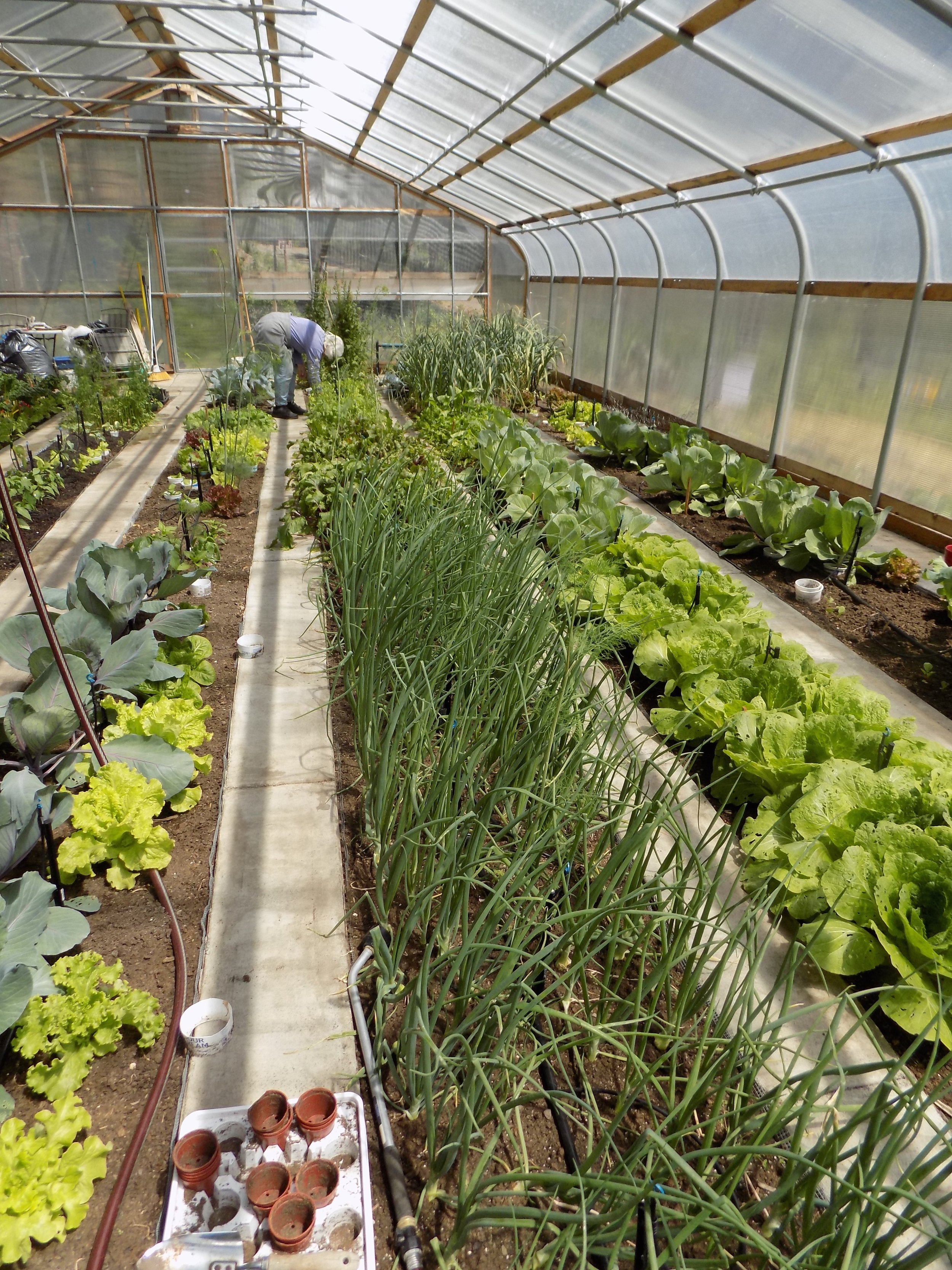 Our greenhouse on our property helps us grow the best quality food.