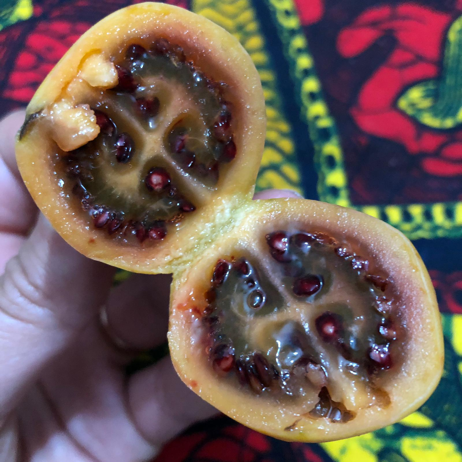 Tree Tomatoes :-) Super lecker