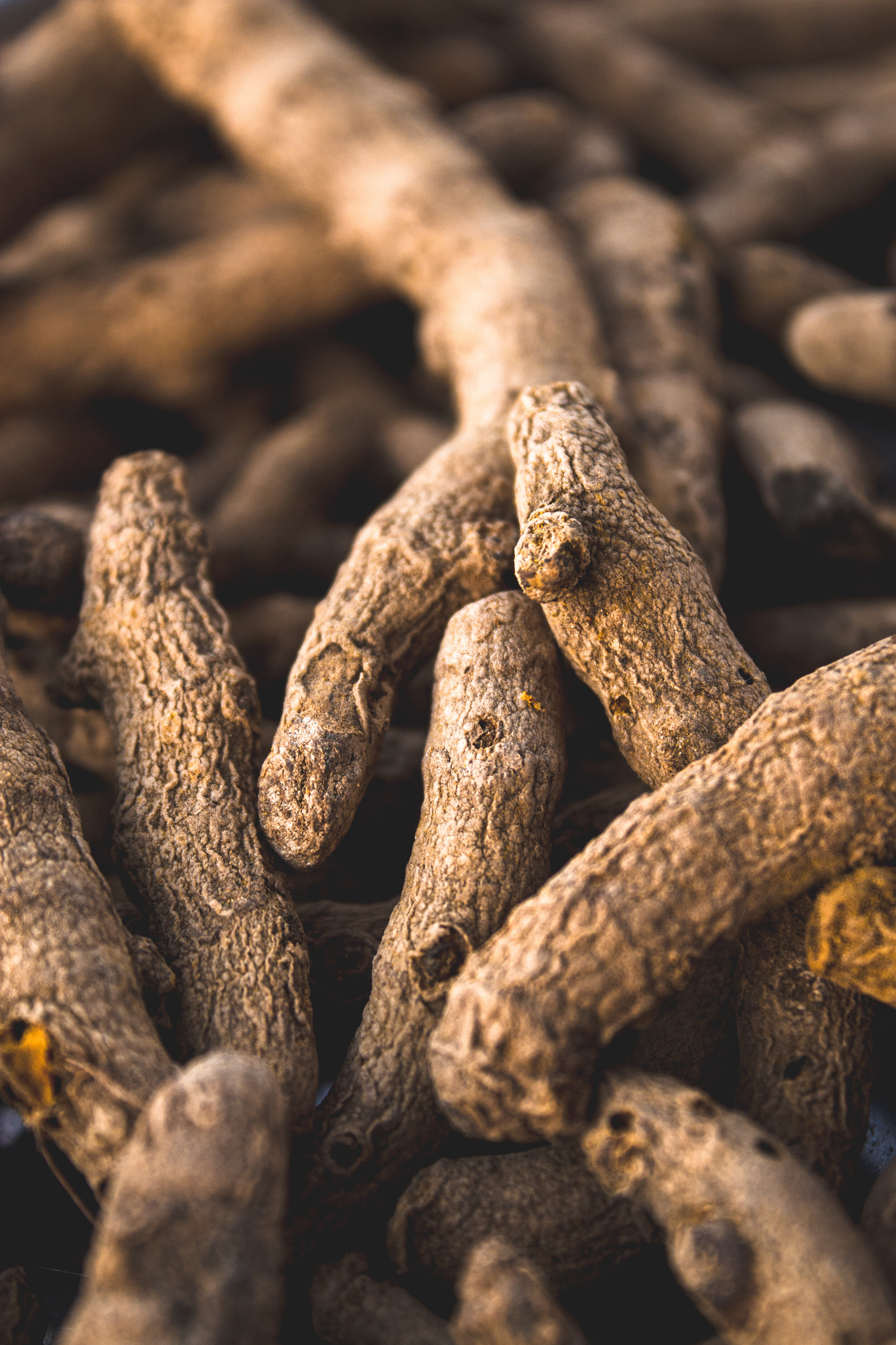 this is a close up image of turmeric root