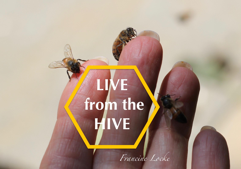 Francine Locke Bees fingers IMG_3429 copy.jpg
