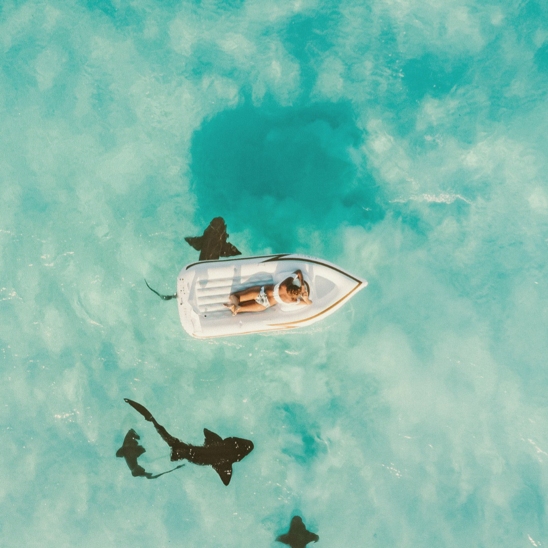 How I imagined the sharks were under our boat