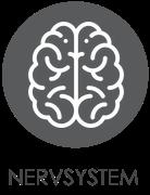 NERVSYSTEM.png