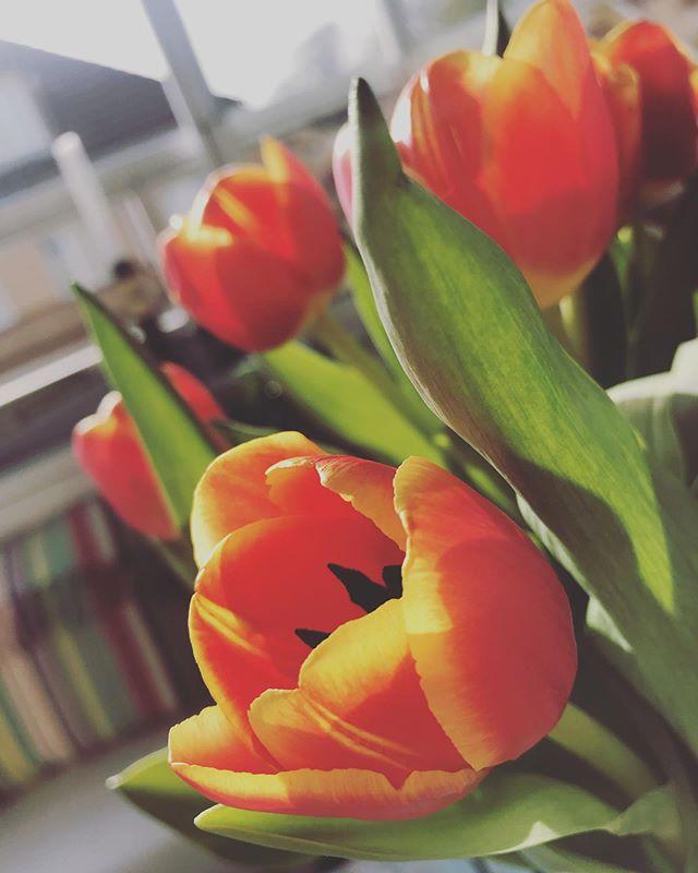 Idag skickar vi en blomma till alla mammor i hela världen!🌷 #morsdag
