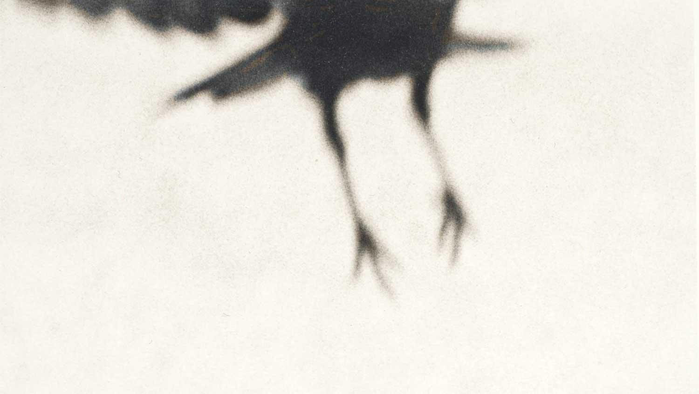 Crow+13-small.jpg