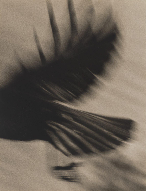 Jane Olin Crow+9.jpg