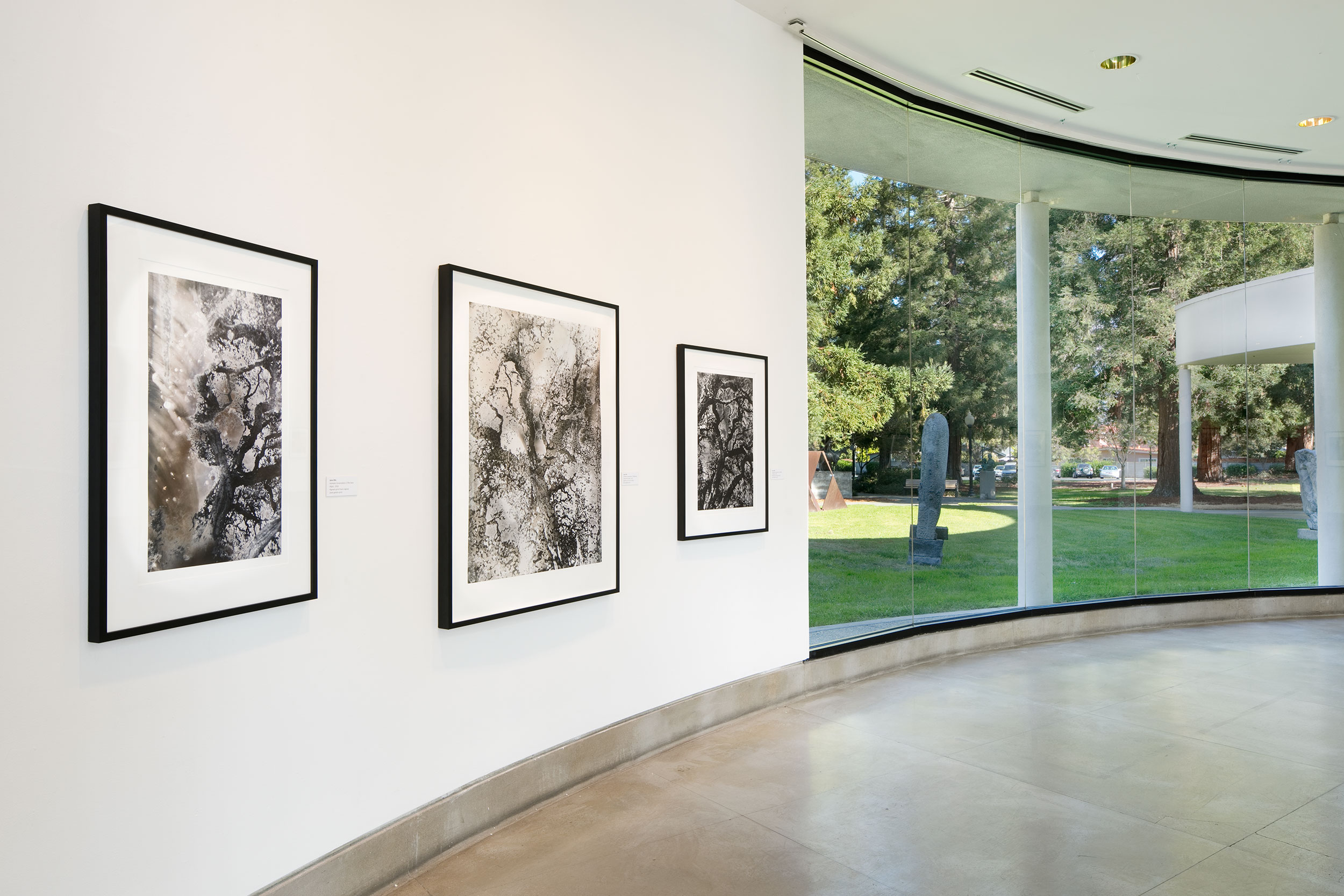 Jane Olin Triton Museum of Art 1.jpg