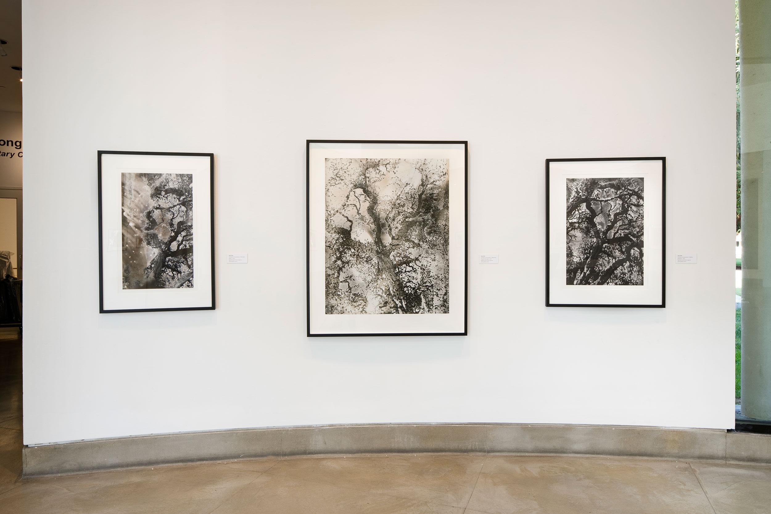 Jane Olin Triton Museum of Art 5.jpg