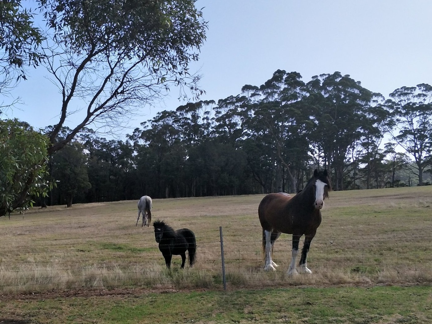 My neighbours at Denmark, WA. Inspiring characters.