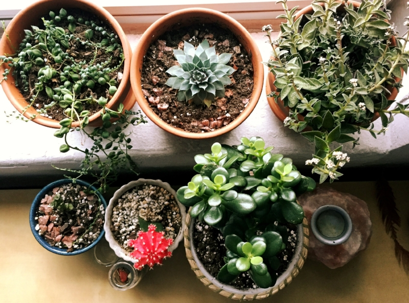 Plants are part of my self-care strategy - greenery prevents sensory deprivation!