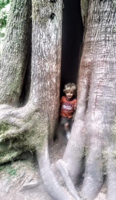 Kiddo in tree.JPG