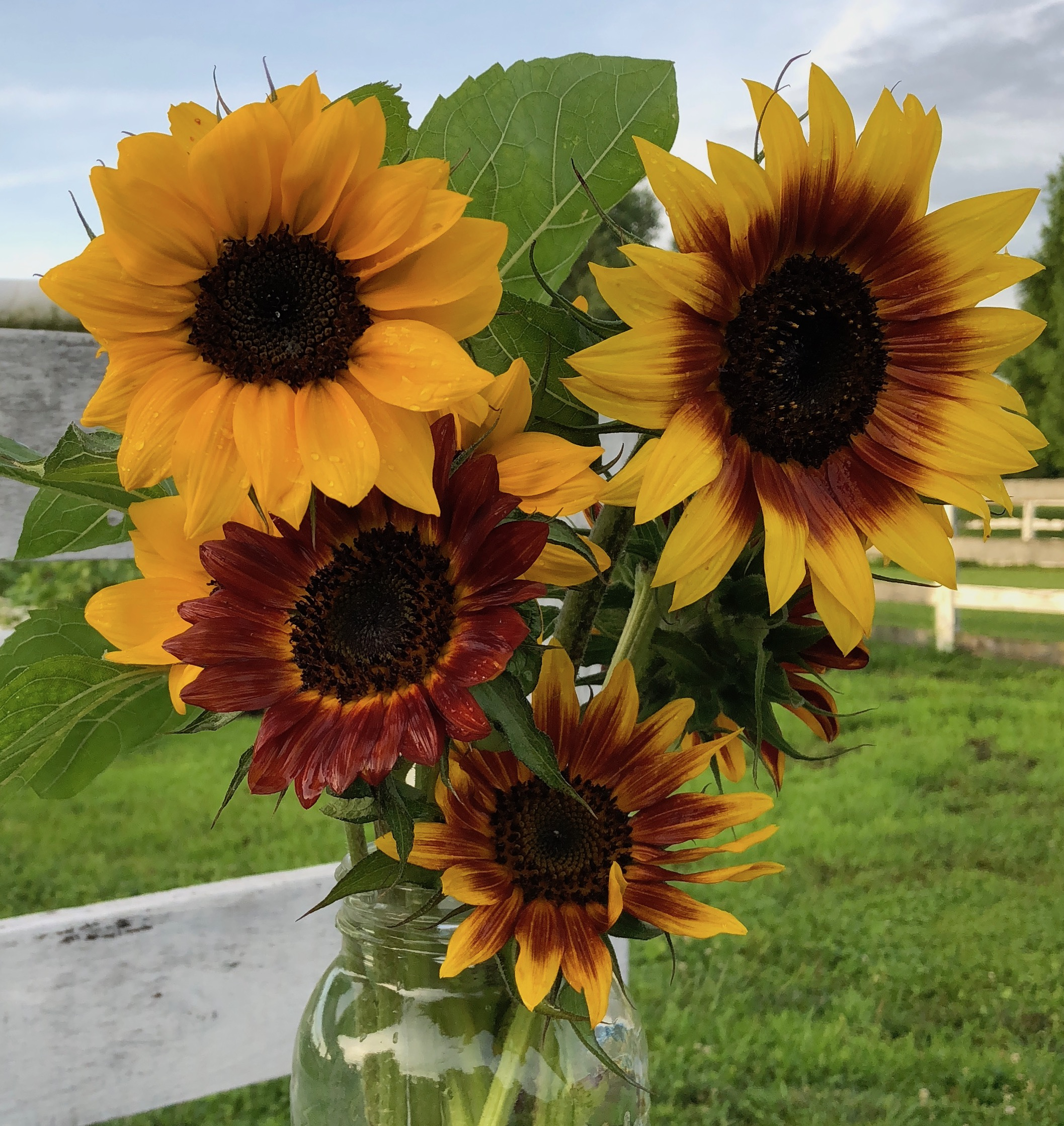 July: Bachelor's Button, Basil, Dill, Baby's Breath, Dusty Miller, Strawflowers, Sunflowers, Sweet Pea, Zinnias, Scented Geraniums -