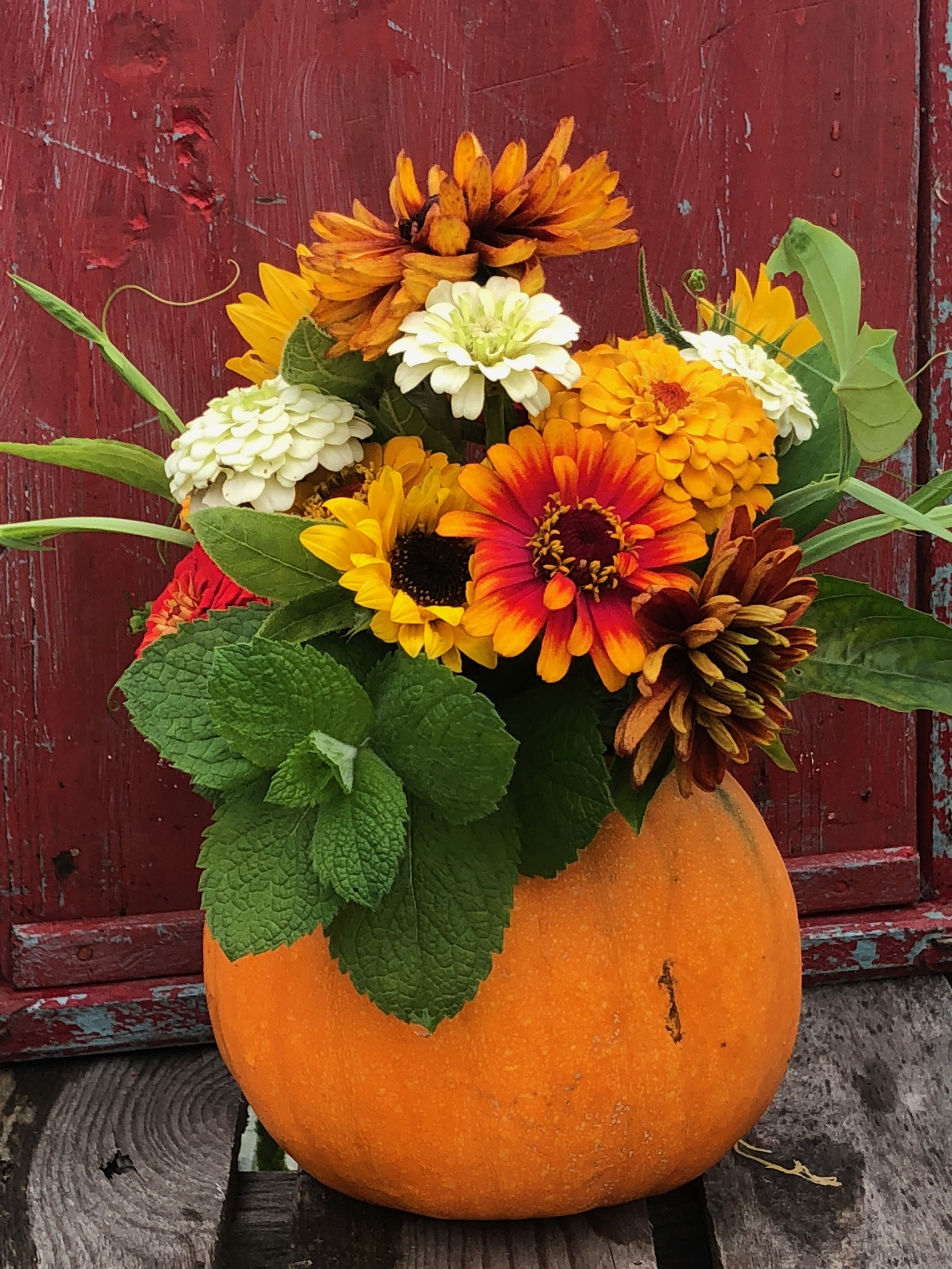 October: Amaranth, Aster, Dill, Basil,Eucalyptus, Orach, Sweet Annie, Salvia, Rudbeckia, Statice Celosia AND PUMPKINS! -
