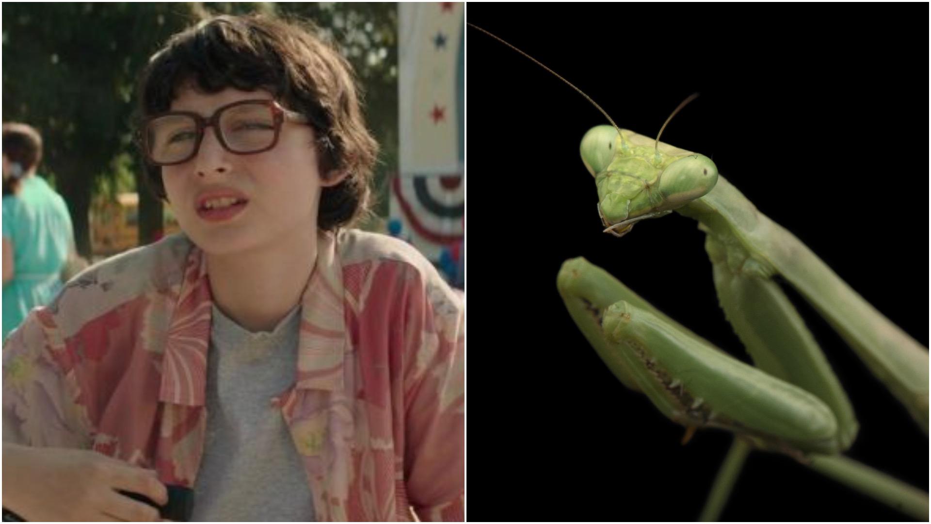 Stranger Mantises.jpg