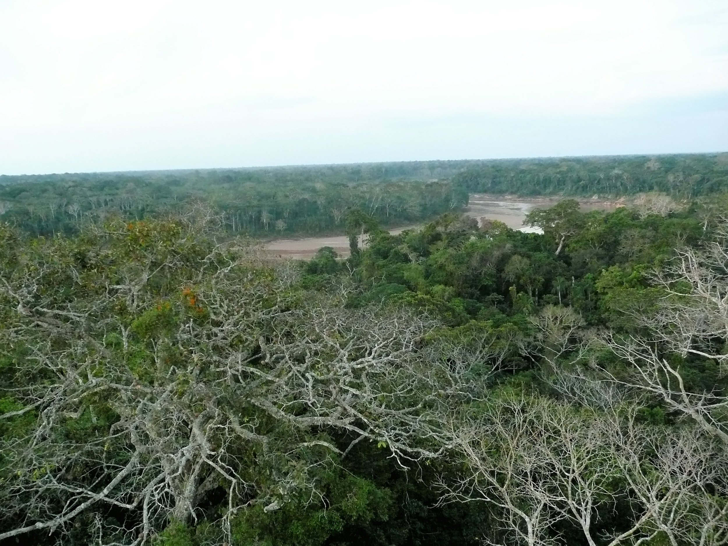 The Amazon Rainforest, from the treetops (Peru)