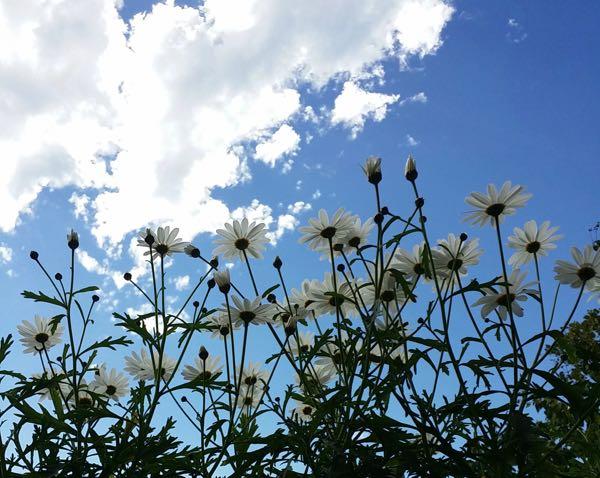 Flowers against summer sky