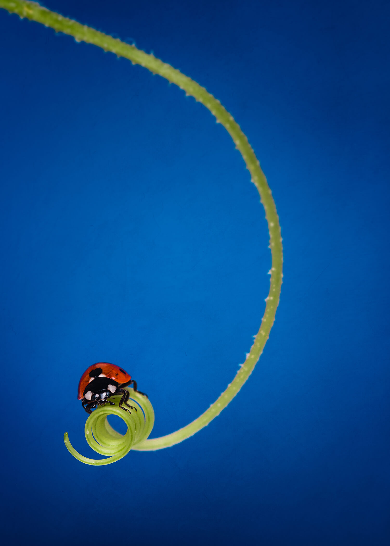 ladybirdfinal.jpg