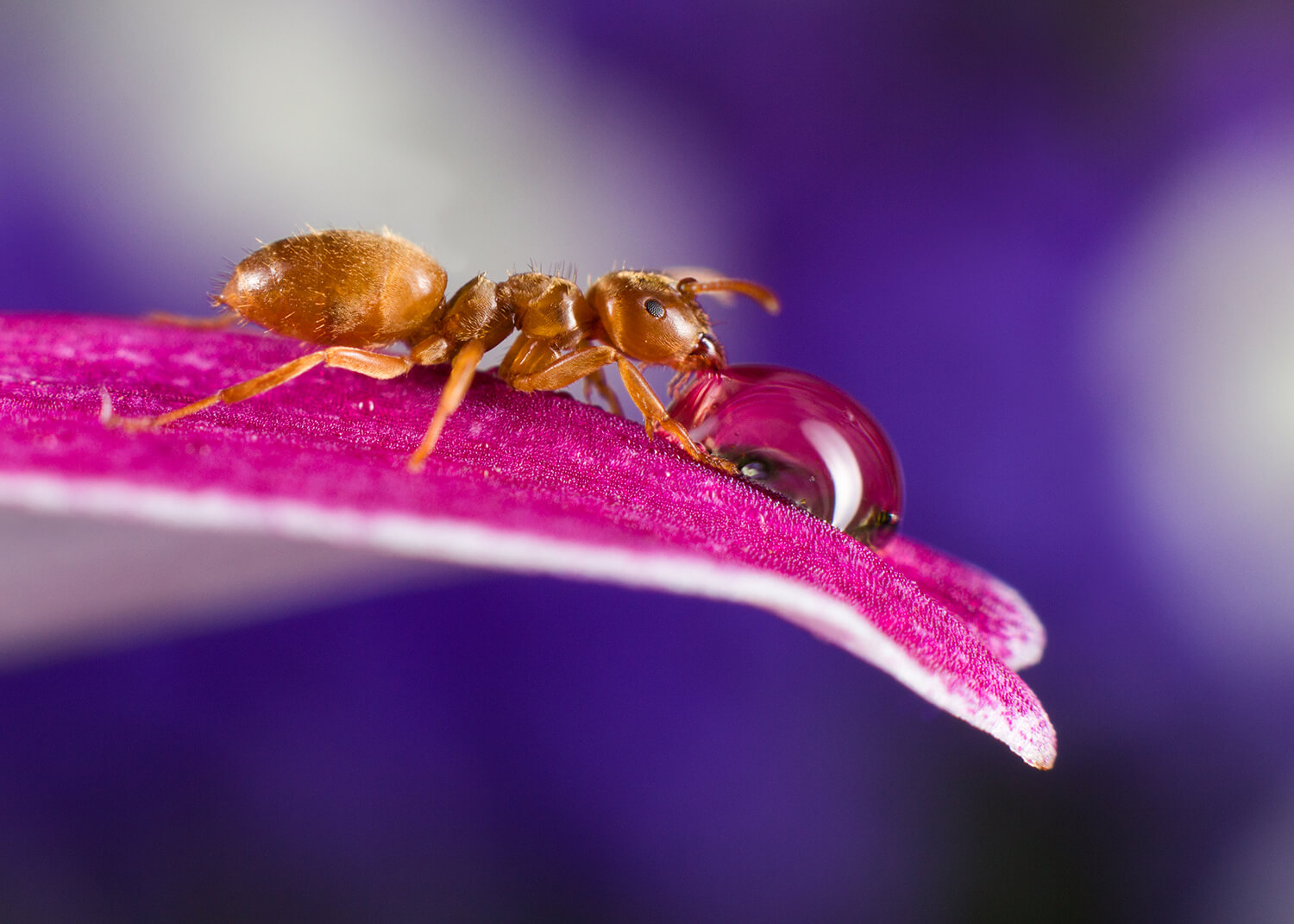 yellow meadow ant.jpg