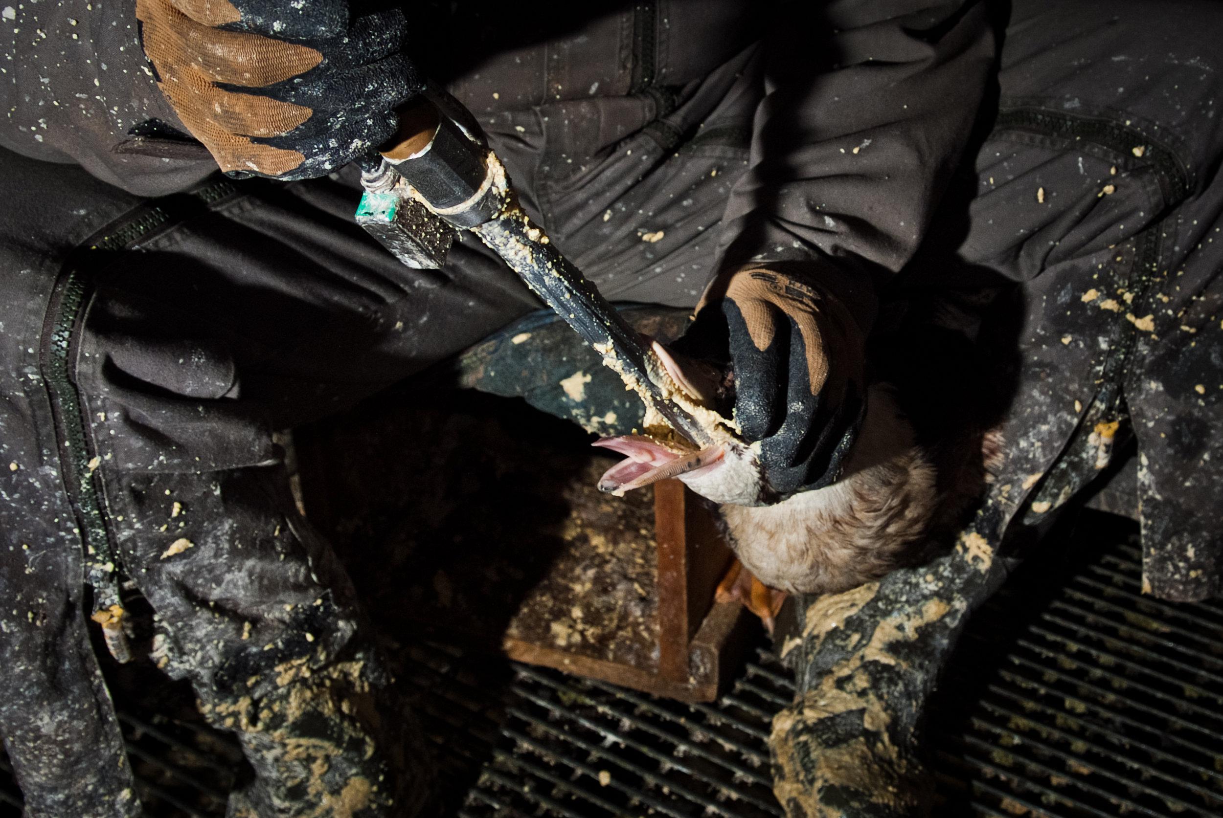 ferme-la-campagnoise---foie-gras_7612052050_o.jpg