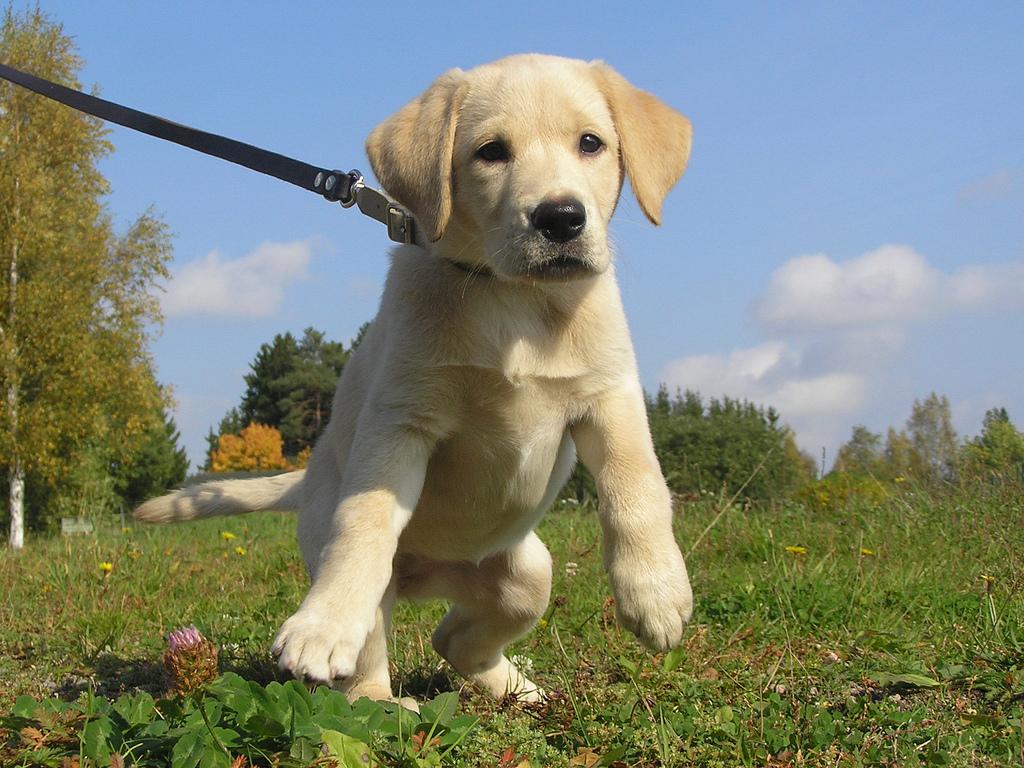 Pupology Pup.jpg