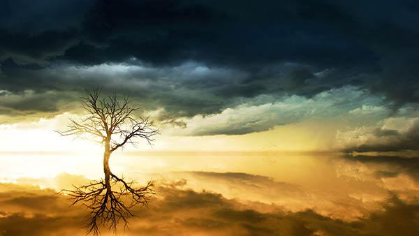 tree-clouds.jpg