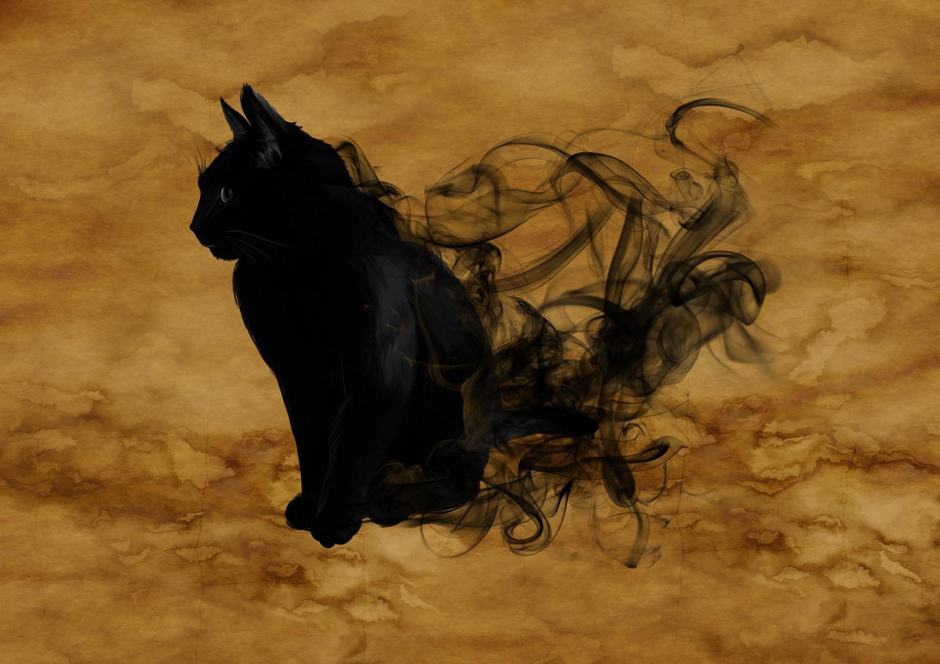 cat-1002850_1920.jpg