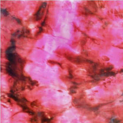 MK5 Fuchsia Nebula