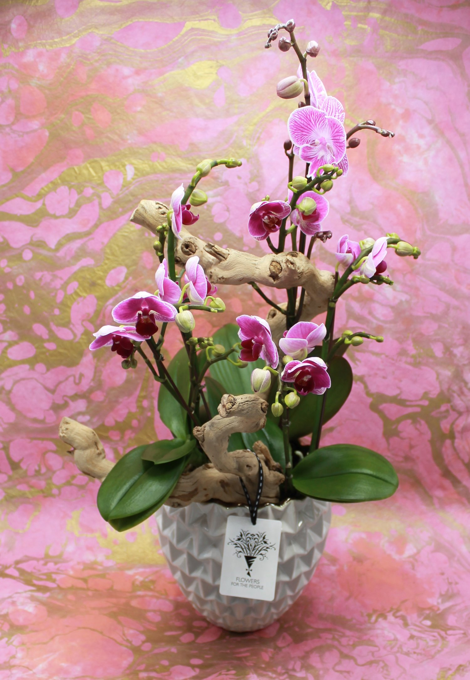 Orchid Planter Flowers For The People