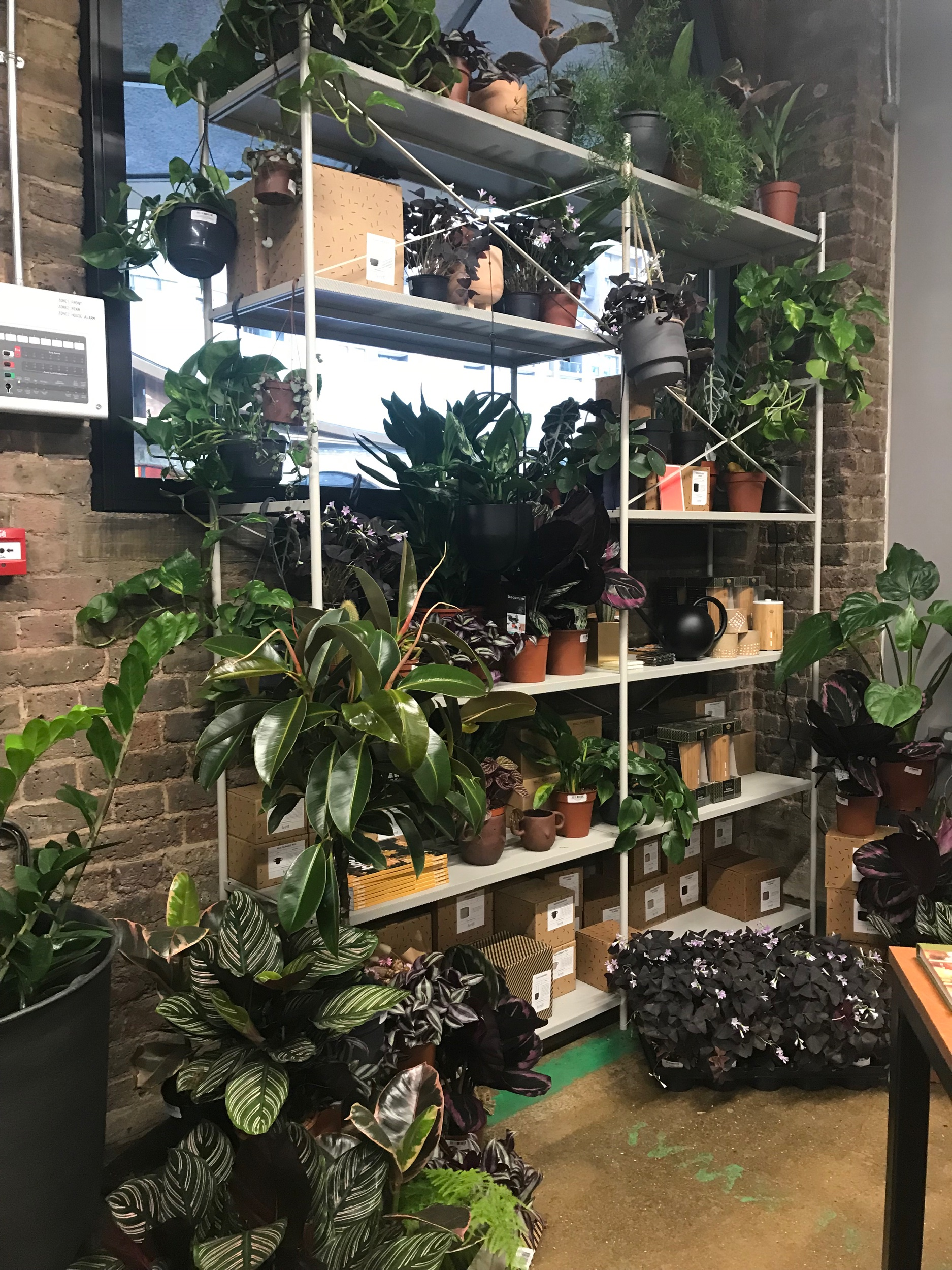 The East of London unit has a lovely collection of indoor plants to choose from with their handmade candles and home products available to buy.
