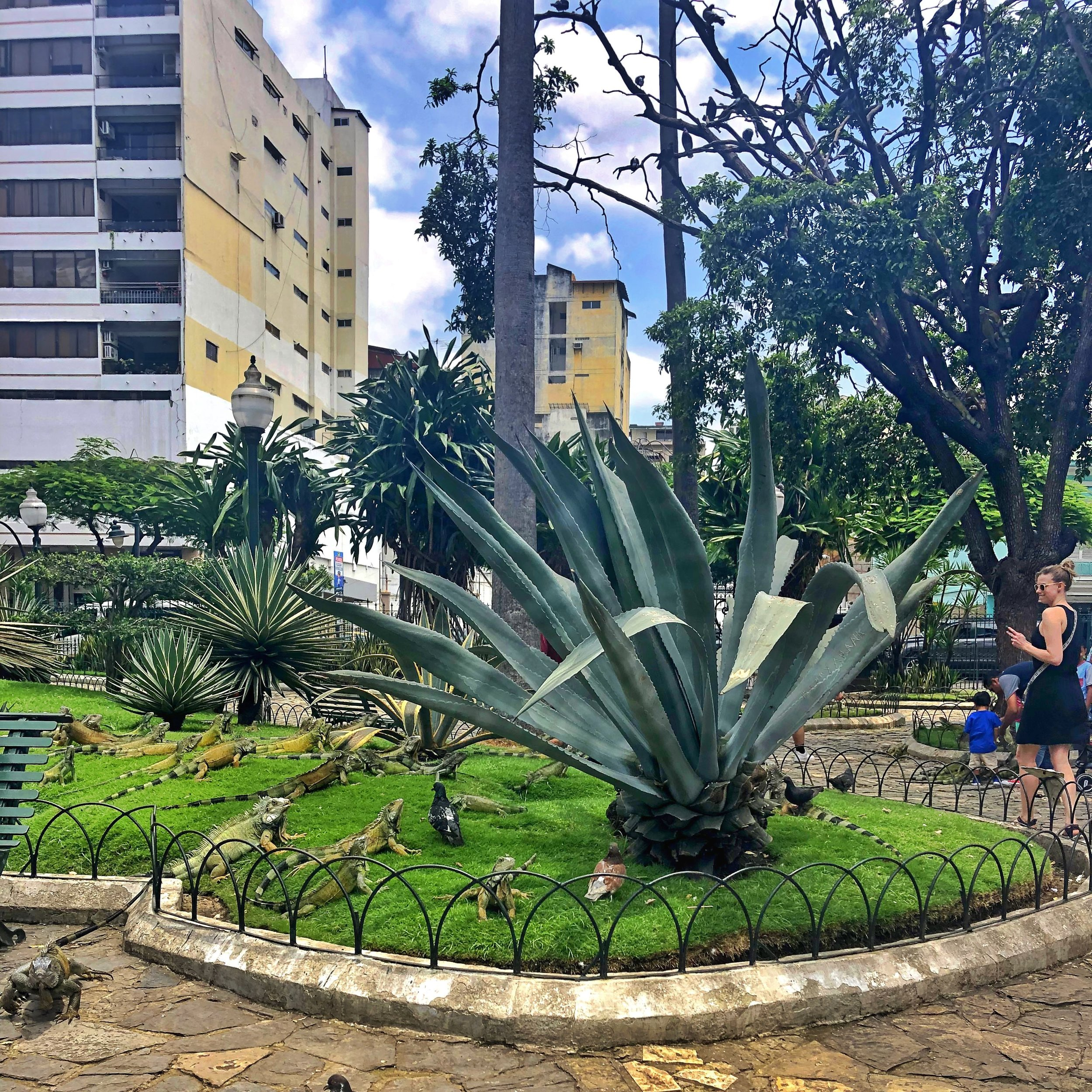A little oasis (for humans AND iguanas) right in downtown Guayaquil