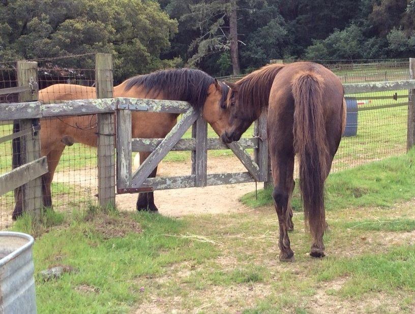 pt reyes horses.jpg