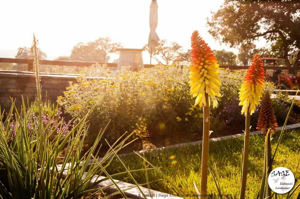 paso-robles_backyard-landsc.jpg