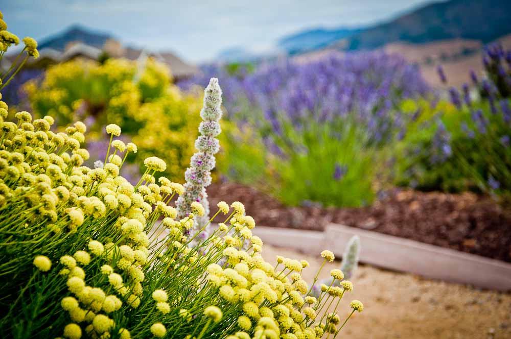 san-luis-obispo-landscaping-sage-ecological-landscapes-o-residence-web-size-10-of-92__dsc0525.jpg