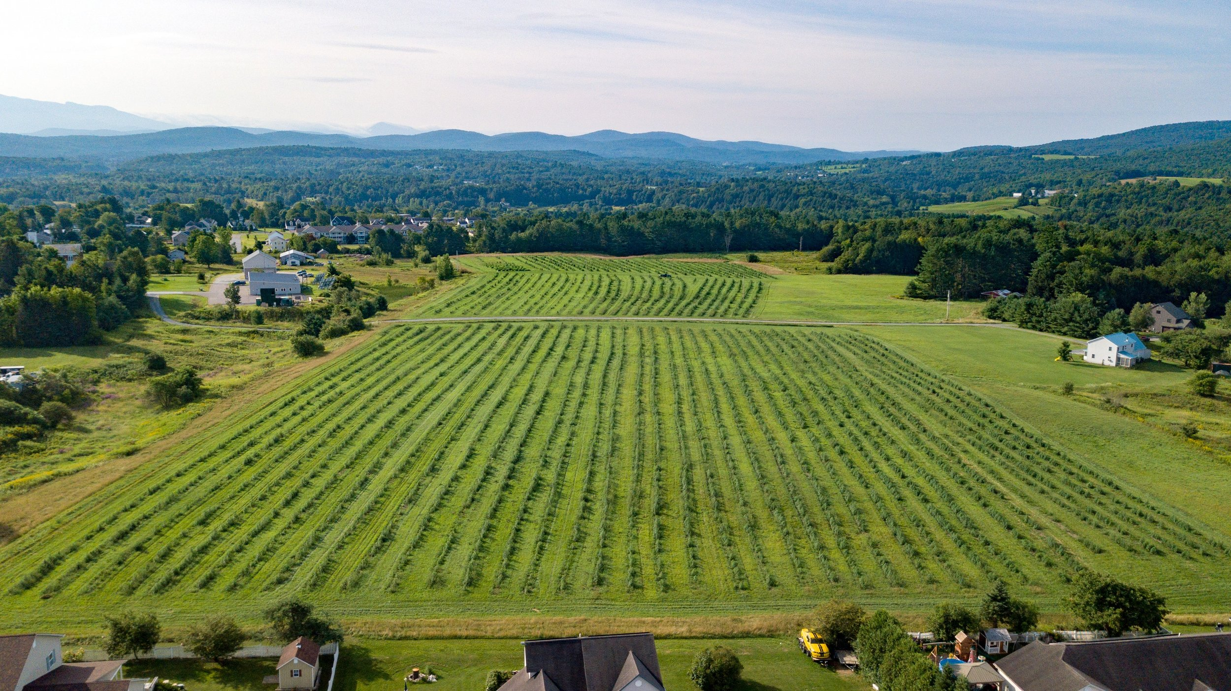 Aerial Landscape - Fairfax Property (5 of 18).jpg