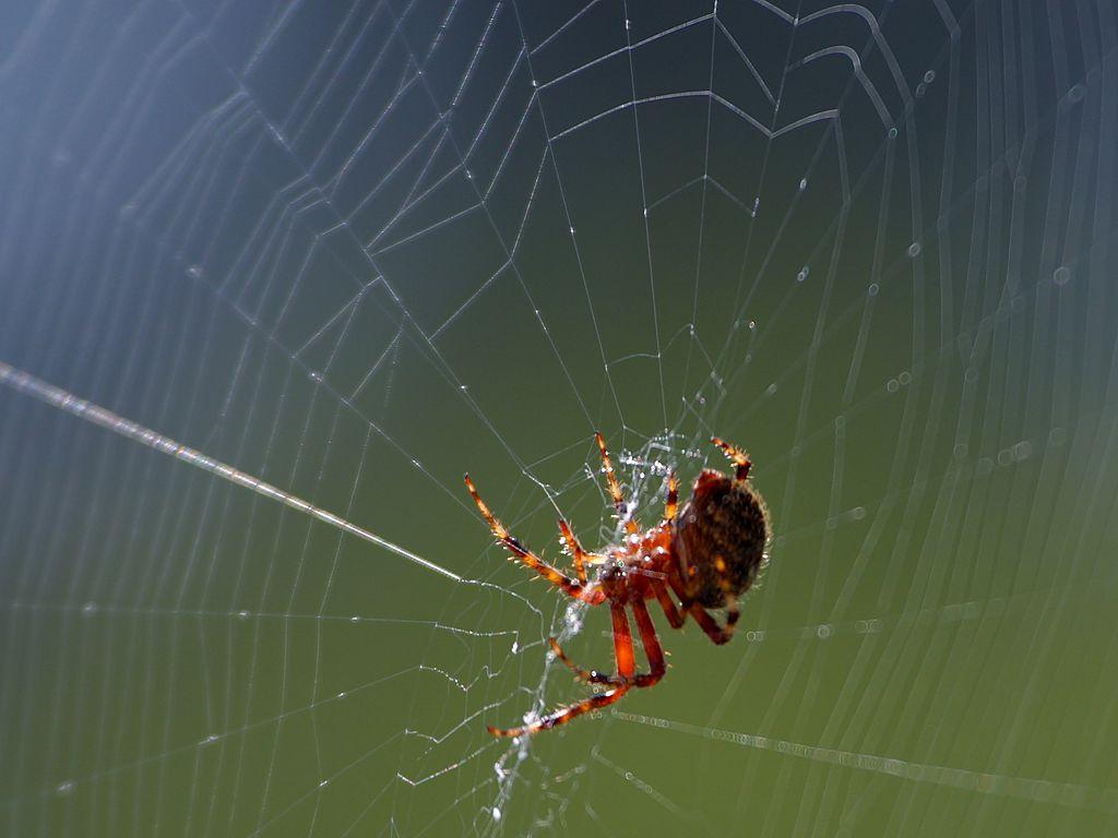 Spinnennetzpd.jpg