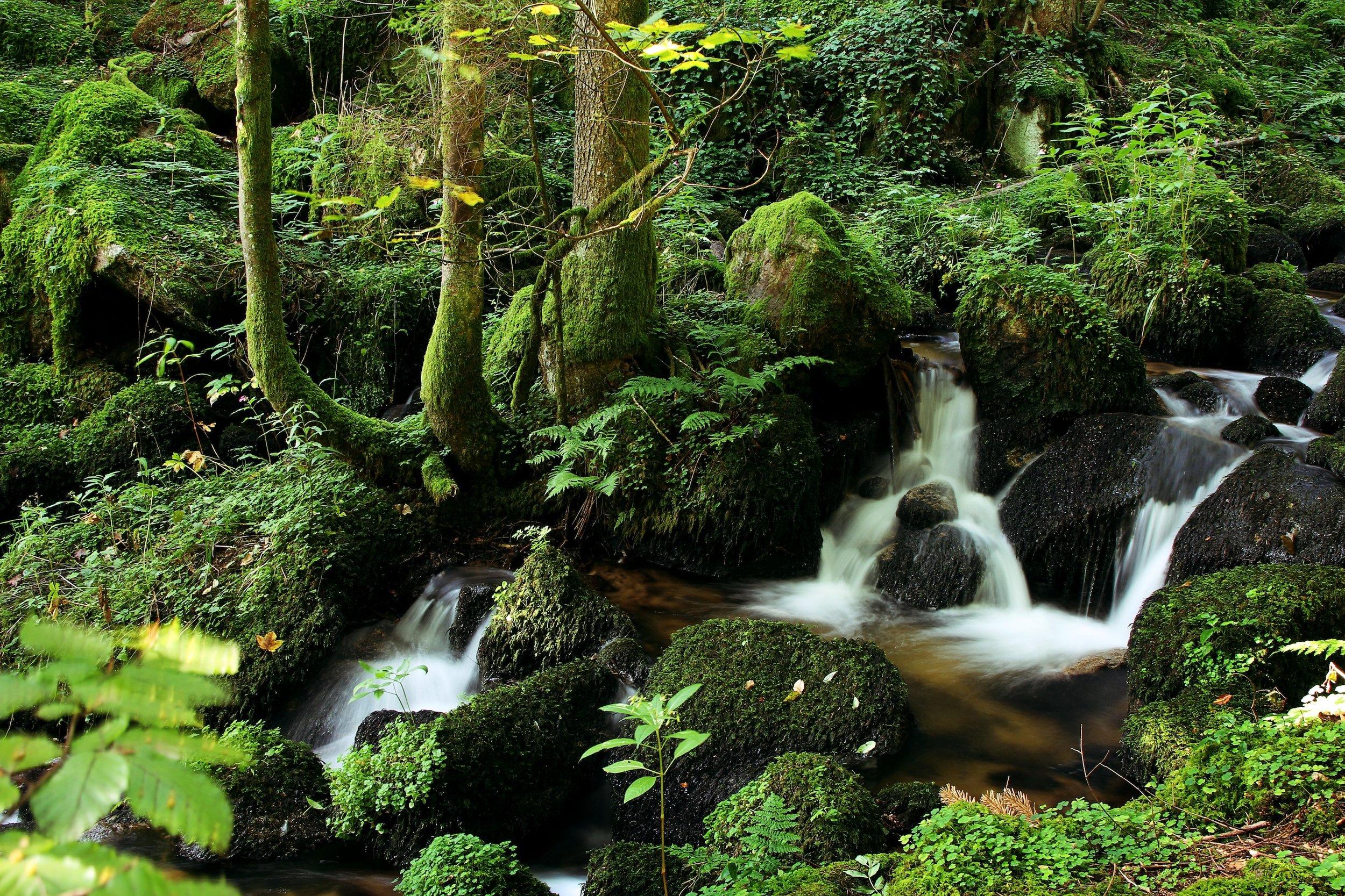 ForestStream-LaurieKehler.com.jpg