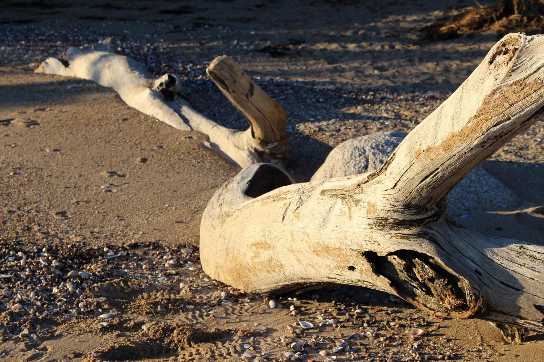 lisa_kellner_artist_blog_unplugged_tree_stump.jpg