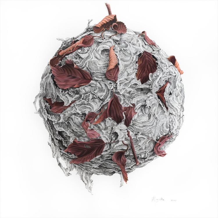 Globe ; Paper Nest Drawings; Charcoal and Pastel on Paper; 21 x 21 inches; Huguette Despault May