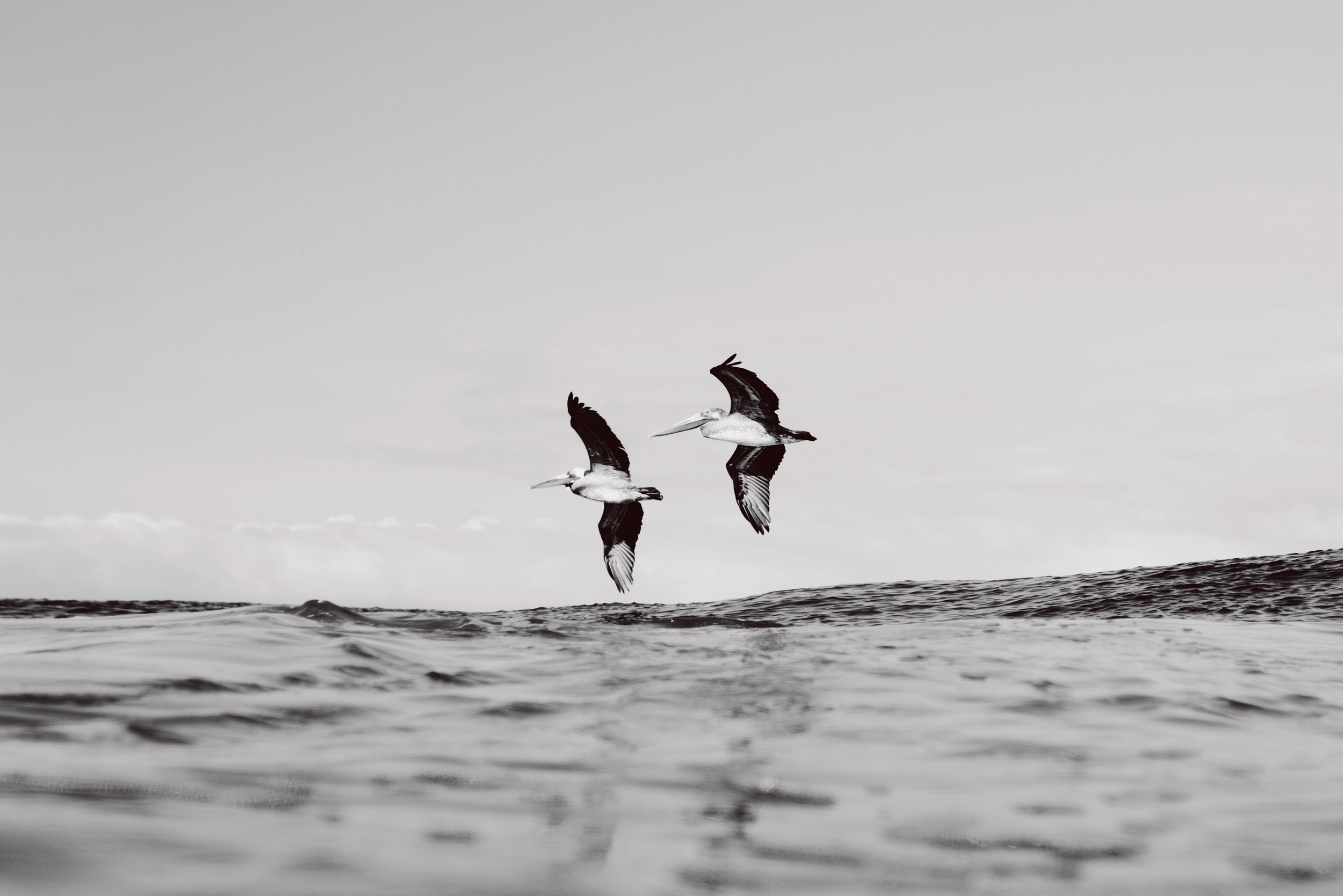 Sayulita-Mexico-Surf-Diego-Cadena-Kalle-Carranza-Dylan-Southworth-Gato-Rodriguez-Julien-Dorian-Gomez-Heiko-Bothe-12.jpg