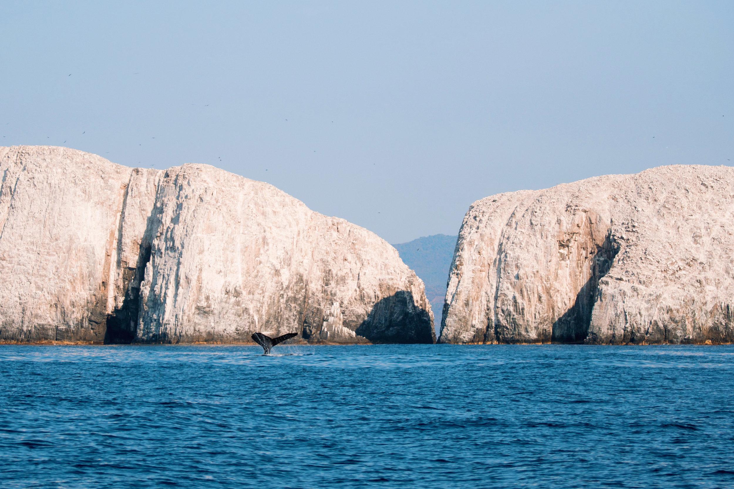 Ballenas-Ixtapa-Zihuatanejo-Fotografia-Heiko-Bothe-1.JPG